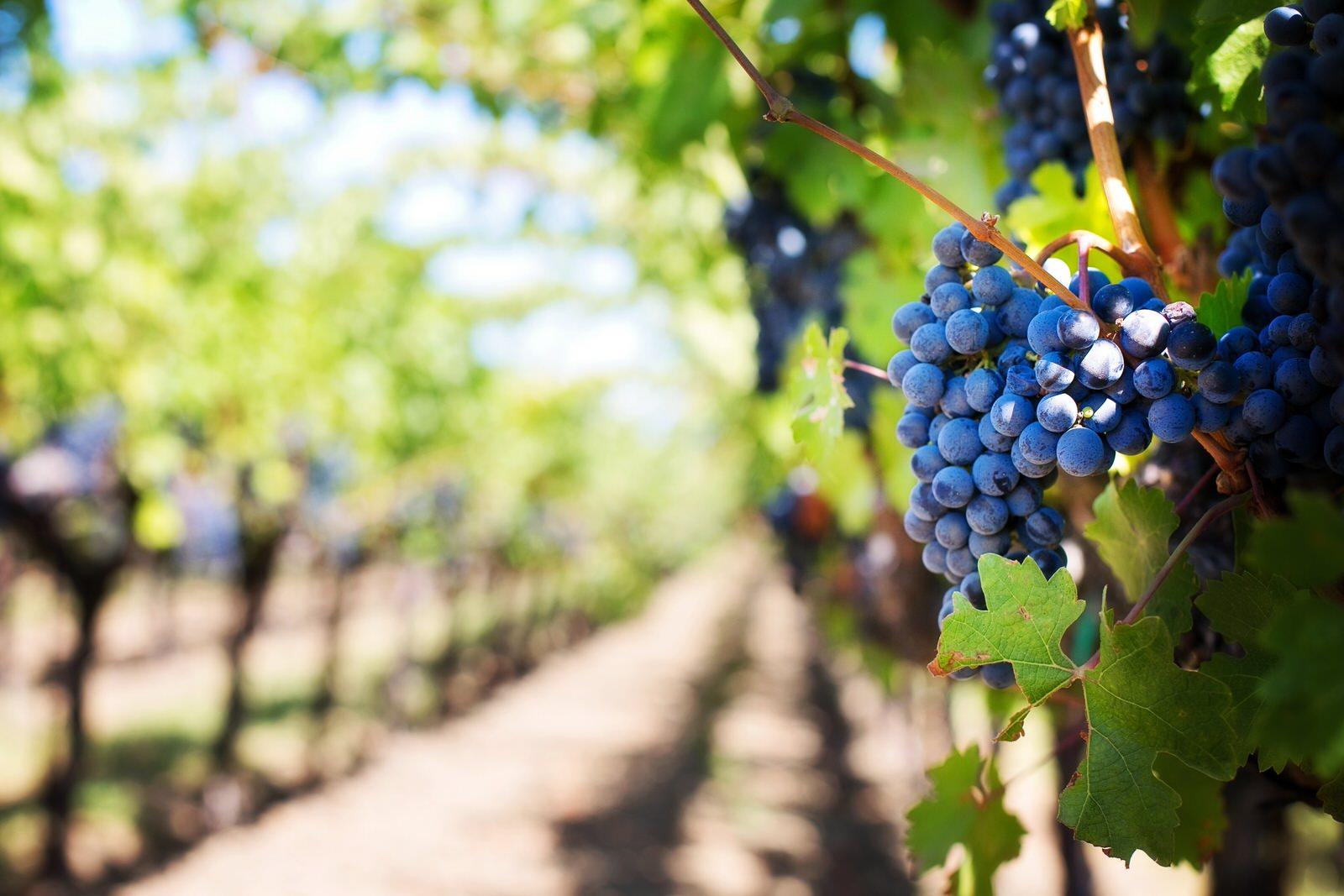 Bienvenue sur Vin du Portugal